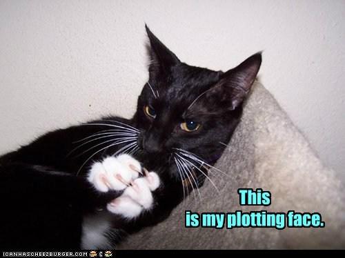 plotting cat